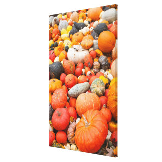 Variety of squash for sale, Germany Canvas Print