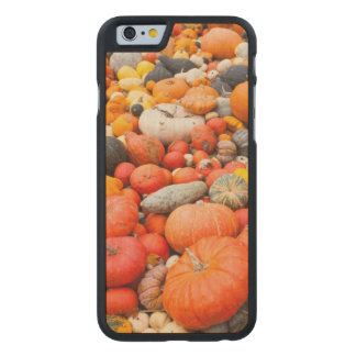 Variety of squash for sale, Germany Carved Maple iPhone 6 Slim Case