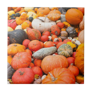 Variety of squash for sale, Germany Tile
