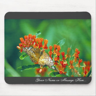 Varigated fritillary on Butterfly weed Mouse Pad