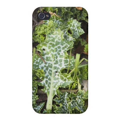 Varigated Green Leaves on the Forest Floor Case For iPhone 4
