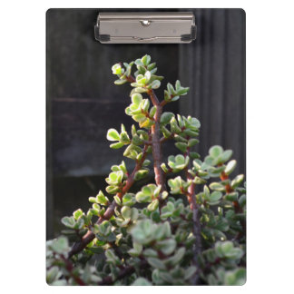 varigated portulacaria against fence plant clipboard
