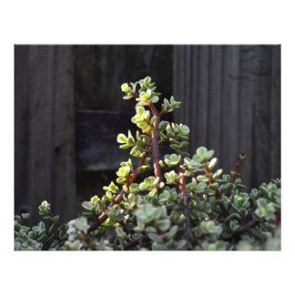 varigated portulacaria against fence plant letterhead template