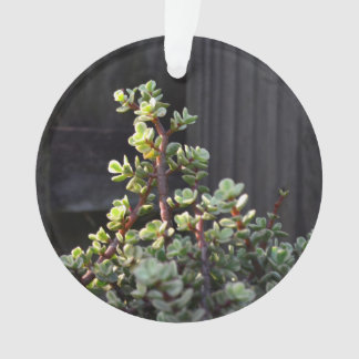 varigated portulacaria against fence plant ornament