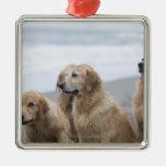 Varios perros perdigueros de oro que se sientan en ornamento de navidad