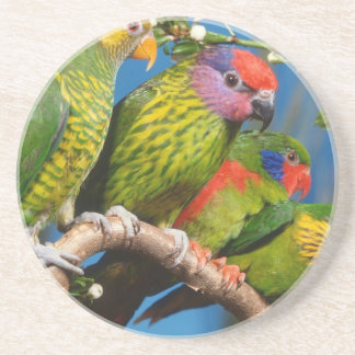 Various Birds Coasters
