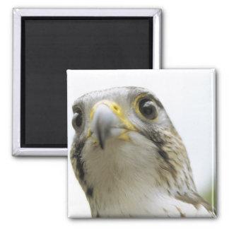 Various Birds Magnet