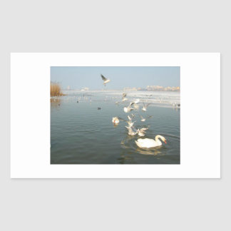 Various birds on lake rectangular sticker