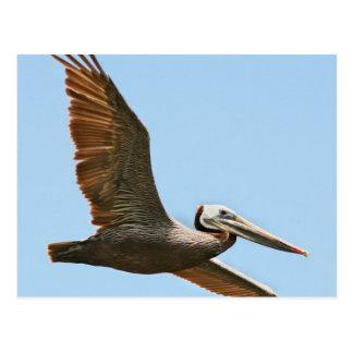 Various Birds Postcard