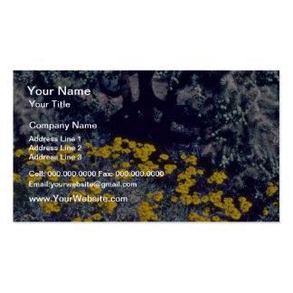 Various Desert Vegetation flowers Double-Sided Standard Business Cards (Pack Of 100)