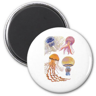 Various Jelly Fish 2 Inch Round Magnet
