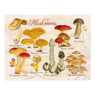 Various Mushrooms Postcard