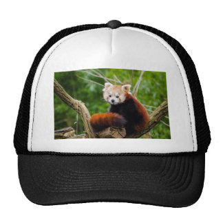 Various objects with a red panda trucker hat