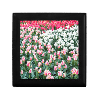 Various red tulips and white daffodils gift box