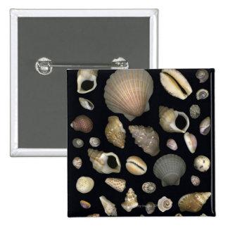 Various sea shells buttons