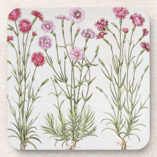 Various varieties of Dianthus, from the 'Hortus Ey Drink Coaster