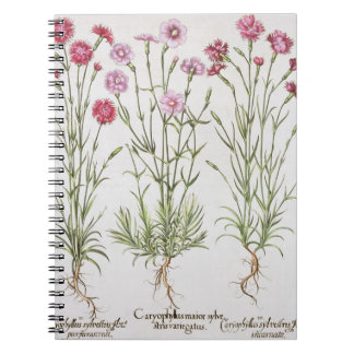 Various varieties of Dianthus, from the 'Hortus Ey Spiral Notebook