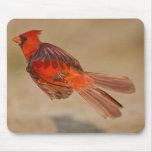 Varón adulto cardinal septentrional en vuelo alfombrillas de ratón