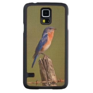 Varón adulto del este 2 del Bluebird (Sialis del Funda De Galaxy S5 Slim Arce