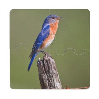 Varón adulto del este 2 del Bluebird (Sialis del Posavasos De Puzzle