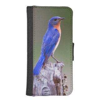 Varón adulto del este del Bluebird (Sialis del Billetera Para iPhone 5