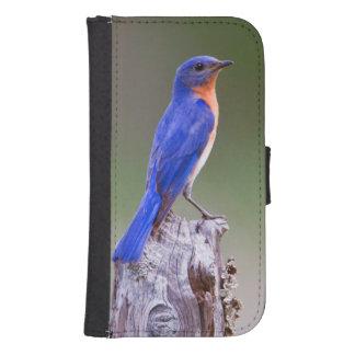 Varón adulto del este del Bluebird (Sialis del Billetera Para Teléfono