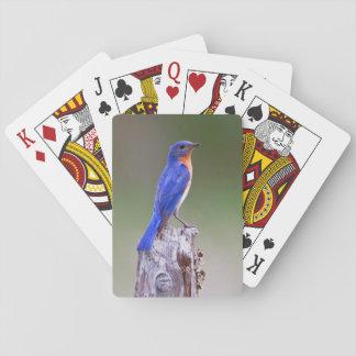 Varón adulto del este del Bluebird (Sialis del Cartas De Juego