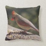 Varón/almohada cardinal femenina