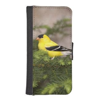 Varón americano del Goldfinch en un árbol Fundas Tipo Cartera Para iPhone 5