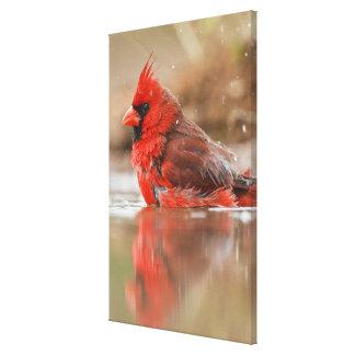 (Varón cardinal septentrional de los cardinalis de Impresión En Lona
