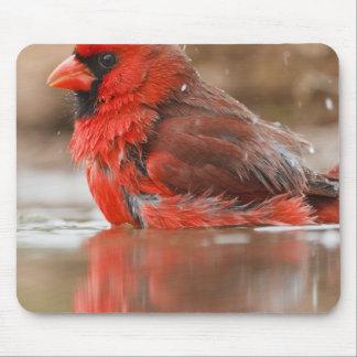 (Varón cardinal septentrional de los cardinalis de Mousepad