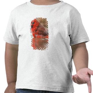 (Varón cardinal septentrional de los cardinalis de Camiseta