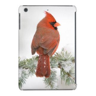 Varón cardinal septentrional en cedro de atlas fundas de iPad mini