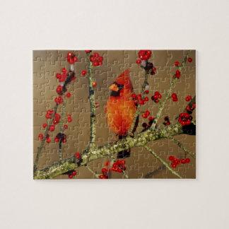 Varón cardinal septentrional encaramado, IL Puzzle