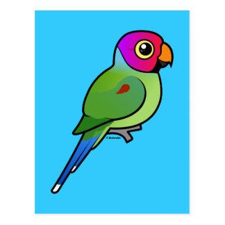 varón Ciruelo-dirigido del Parakeet Postales