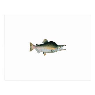 Varón de color salmón del Humpback (que freza Postal
