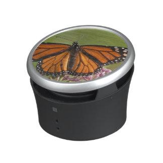 Varón de la mariposa de monarca en Milkweed de Altavoz
