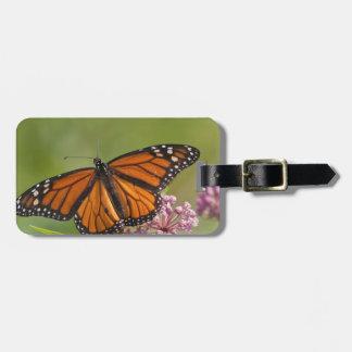 Varón de la mariposa de monarca en Milkweed de Etiquetas Maletas