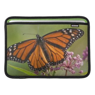 Varón de la mariposa de monarca en Milkweed de Fundas MacBook