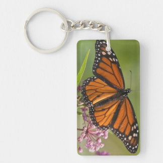Varón de la mariposa de monarca en Milkweed de Llavero Rectangular Acrílico A Doble Cara