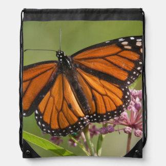 Varón de la mariposa de monarca en Milkweed de Mochilas