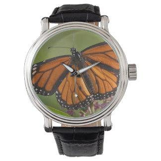 Varón de la mariposa de monarca en Milkweed de Reloj De Mano