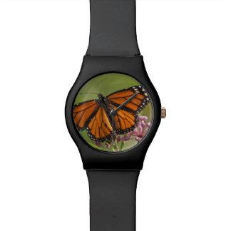 Varón de la mariposa de monarca en Milkweed de Relojes De Pulsera