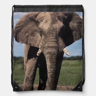 Varón de los jóvenes del elefante mochila