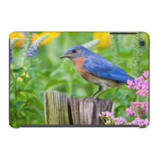 Varón del Bluebird en el poste de la cerca en Fundas De iPad Mini Retina