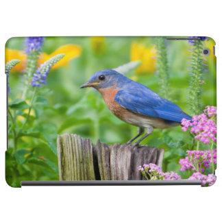 Varón del Bluebird en el poste de la cerca en