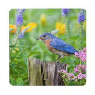 Varón del Bluebird en el poste de la cerca en Posavasos De Puzzle
