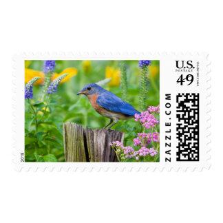 Varón del Bluebird en el poste de la cerca en Timbre Postal
