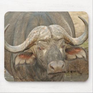 Varón del búfalo alfombrillas de raton