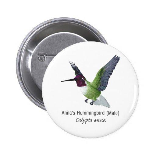 Varón del colibrí de Ana con nombre Pin
